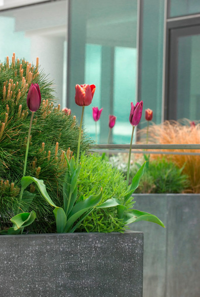 london roof terrace planting detail
